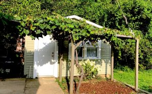 Photograph of small building with grape arbor